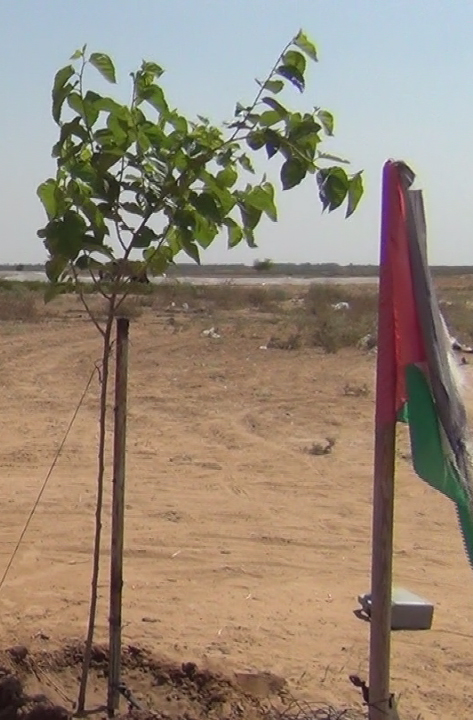 The tree was planted by Zeina's family where she was killed by the Israeli occupation forces